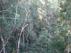 A zipline between the tree-tops