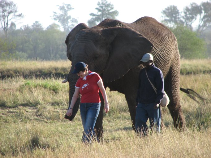 Walking with the elephants (click on the image to read more)