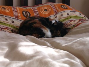 Tuffy-Cat on the soft bed