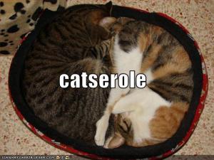 Catserole