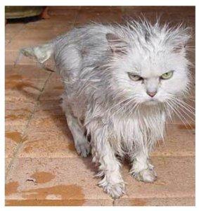 Stupid rain, stupid winter...