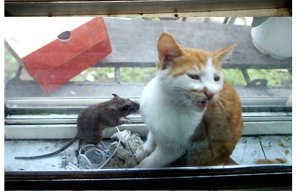 cat-and-mouse2