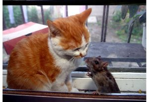cat-and-mouse3