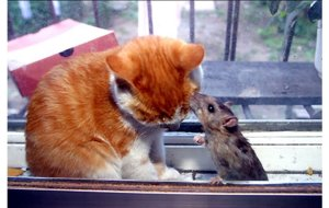 cat-and-mouse4