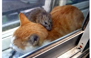 cat-and-mouse5