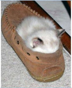 The old cat who slept in a shoe