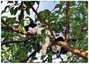 A deli-cat sense of balance