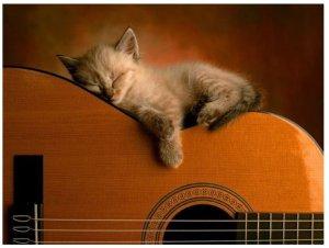 A mewsical kitten