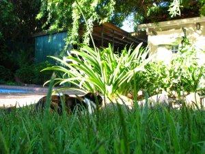 Tuffy hidden in the grass