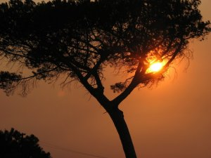 A smoke-reddened sun