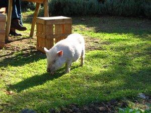 Millie foraging
