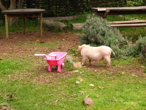 Millie and the pink wheelbarrow