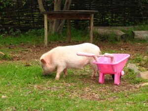 A happy piglet