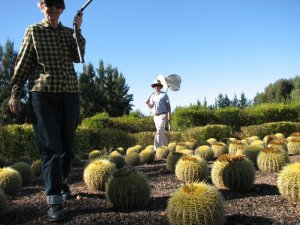 The Cacti Labyrinth