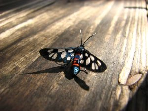 A strange colourful insect