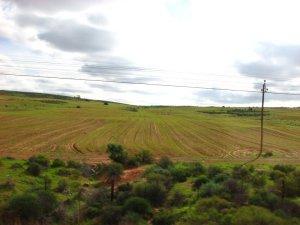 Fields near Clanwilliam