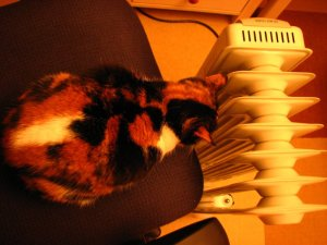 Tuffy and her heater