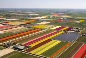 A patchwork quilt of colourful tulips