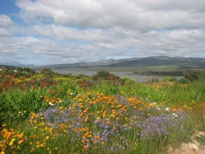 Overlooking the Clanwilliam dam