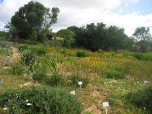 Ramskop wild flower reserve