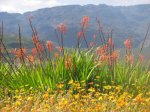 Flower season in Clanwilliam