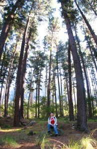 In the Newlands pine forest