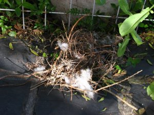 The sad remains of the nest