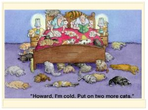 Cartoon-cats-on-bed