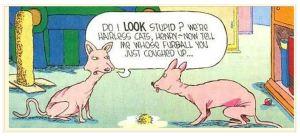 Cartoon-furball