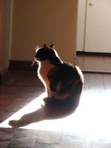 Tuffy's sun-halo