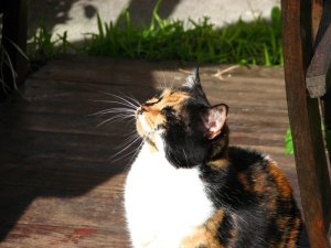 A cat in heaven...
