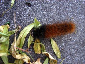 02 Caterpillar