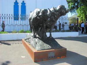 7. Buffalo Bull Pair
