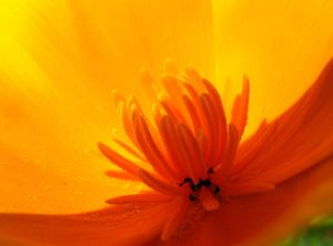 Orange-yellow-flower4