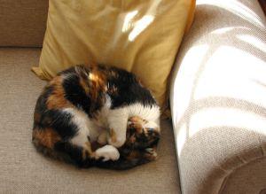 A very sleepy cat