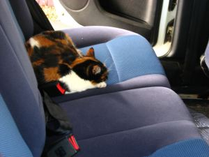 Tuffy-Cat on the back seat