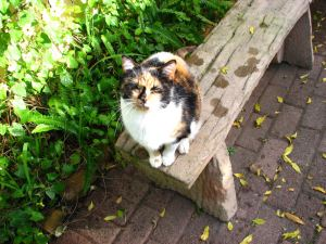 Tuffy-on-bench