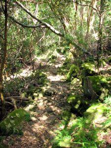 04-Pretty-path