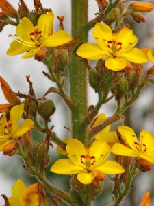 06-Yellow-flowers-close-up