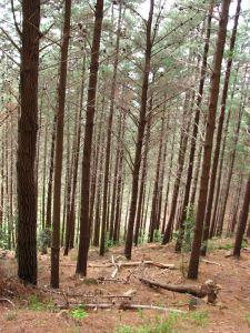 11-Tree-trunks