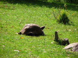 12-Tortoise