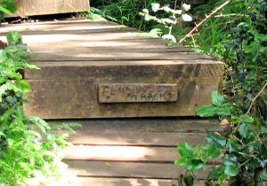 13-Fernwood-track