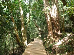 16-Contour-path
