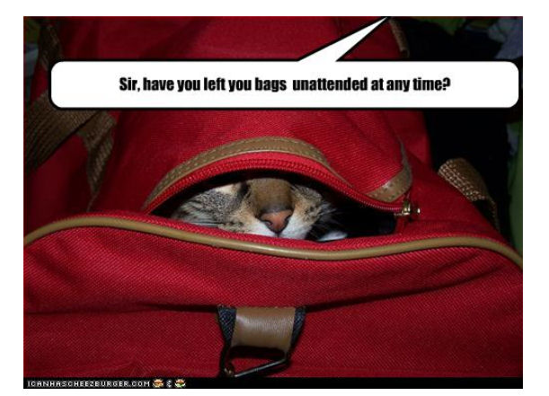 Why Do Cats Like Suitcases