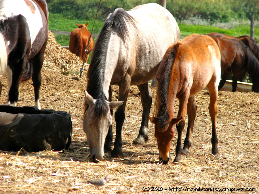 an update to �the horses of oude molen� grains of sand