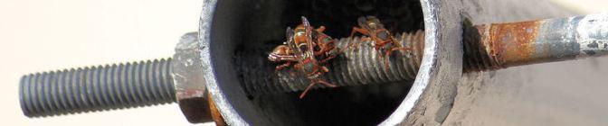 Header-Wasps