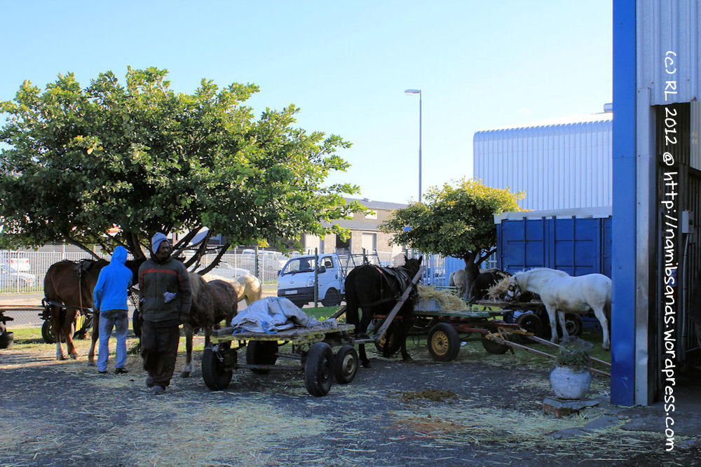 Half Price Horseshoes For Cape Town S Cart Horses Farrier