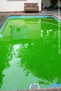 Is our pool green enough to win a prize?