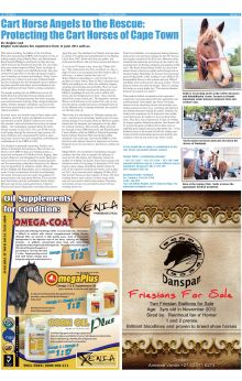 My article in the Equestrian Express