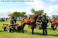 Sue Mutch assessing one of the cart horses